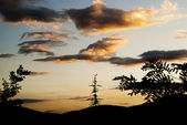 Silhouette of trees against sunset dark sky — Stock Photo