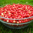 Lingonberry after purification on a glass bowl — Stock Photo