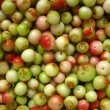 Stock Photo: Green, unripe fruits harvested lingonberry