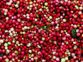 Lingonberry before cleaning, the background — Stock Photo