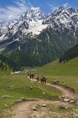 Heading towards the Himalayas — Stock Photo