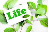 Message de la vie sur les feuilles — Photo