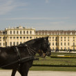 Horse at schoenbrunn palace — Stock Photo