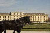 Horse at schoenbrunn palace — Stockfoto