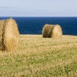 Stock Photo: Round bales of straw