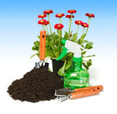 Flower planting — Stock Photo