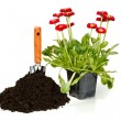 Stock Photo: Flower planting
