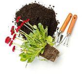 Bloem potgrond, vuil en tuinieren hulpmiddelen — Stockfoto