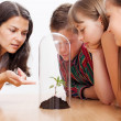 Students looking at plant inside greenhouse — Stock Photo