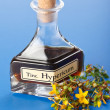Stock Photo: Hypericum plant and extract