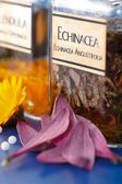 Zavřít pohled echinacea angustifolia rostlinného extraktu — Stock fotografie