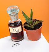 Aloë ferox plant, uitpakken en blad — Stockfoto