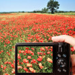 Camera in poppy field — Stock Photo