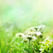 Spring background with flowers — Stock Photo #5819800