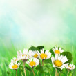 Spring background with daisies — Stock Photo #5819989