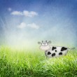 Cow in the field — Stock Photo #5820909