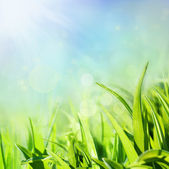 Spring background with grass — Stock Photo