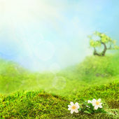 Spring background with grass and blue sky — Stock Photo