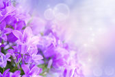 Campanula bouquet — Stock Photo
