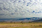 Granja con cúmulos nubes, montana, estados unidos — Foto de Stock