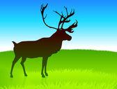 Deer Grazing on Field — Stock Vector