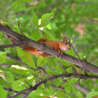 The squirrel on a tree — Stock Photo
