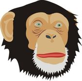 Head of a monkey — Stock Vector