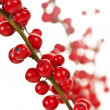 Stock Photo: Red Christmas berries