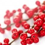 Red Christmas berries — Stock Photo