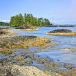 Coast of Pacific ocean, Vancouver Island, Canada — Stock Photo