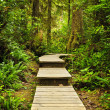 Stock Photo: Path in temperate rainforest