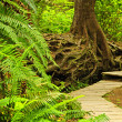 Path in temperate rainforest — Stock Photo