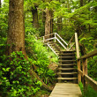 Path in temperate rainforest — Stock Photo #6649124