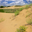 Desert landscape in Manitoba, Canada — Stock Photo