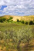 Sand dunes in Manitoba — Stock Photo