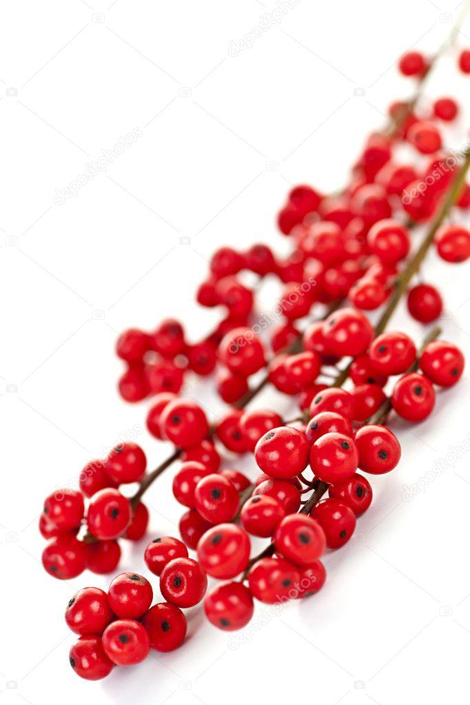 по: цене красные ветки для урашения растение