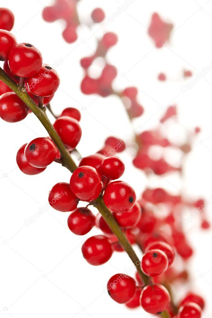 Rote Beeren Weihnachten
