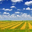 Wheat farm field at harvest — Stock Photo #6696340