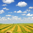 Wheat farm field at harvest — Stock Photo #6696342