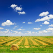 Wheat farm field at harvest — Stock Photo