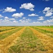 Wheat farm field at harvest — Foto Stock