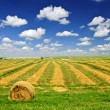 Wheat farm field at harvest — Stock Photo #6696350