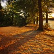 Sunset in woods at lake shore — Stock Photo #6696375