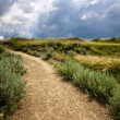 Trail in Badlands in Alberta, Canada — Stock Photo #6696442