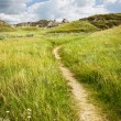 Trail in Badlands in Alberta, Canada — Stock Photo #6696463
