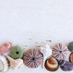 Background with seashells — Stock Photo