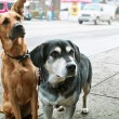 Two dogs on sidewalk - Stok fotoğraf