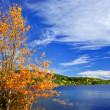 Fall forest and lake — Stock Photo