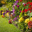 Colorful garden flowers — Stock Photo
