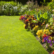 Colorful garden flowers — Stockfoto #6696585